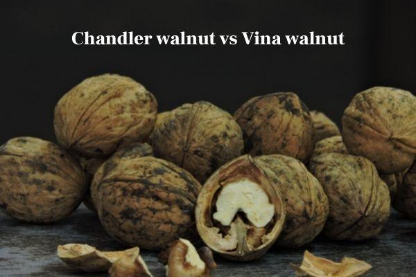 Chandler walnut vs Vina walnut